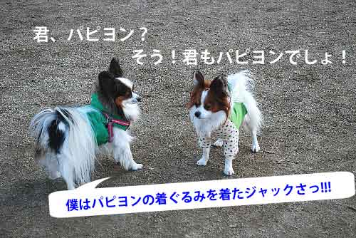 DSC_0224_20081215202736.jpg
