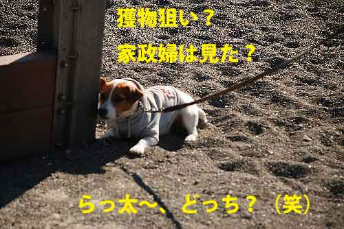 DSC_0263_20090205124257.jpg