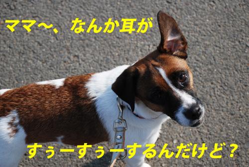 DSC_0890.jpg
