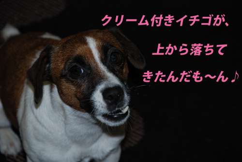 DSC_0961.jpg