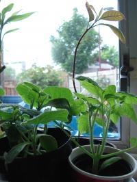plant0518