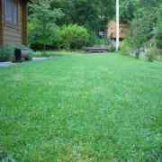 芝生のブログ