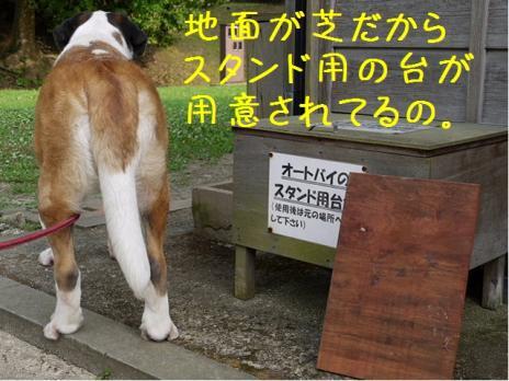 バーディin松江城03