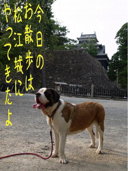 バーディin松江城01