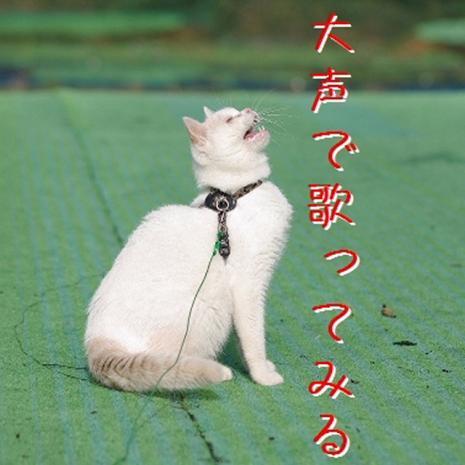 石松散歩04
