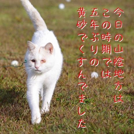 石松散歩01