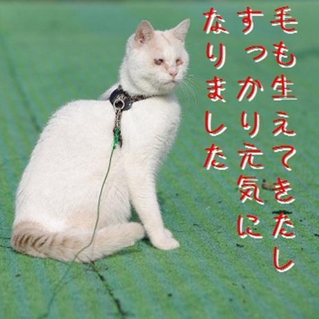 石松散歩03