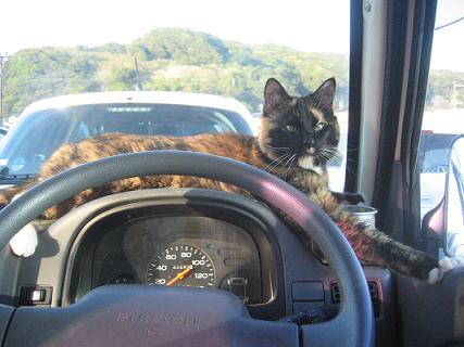 旅猫メイさん