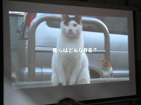 夏猫イベント動物愛護 014
