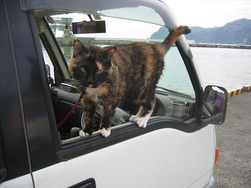 試される猫