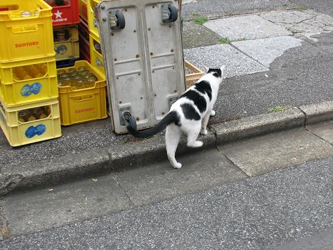 やなせん猫探訪 042