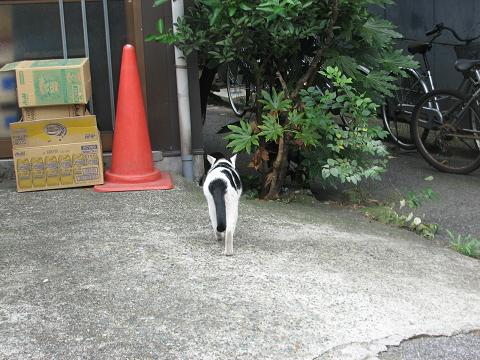 やなせん猫探訪 043