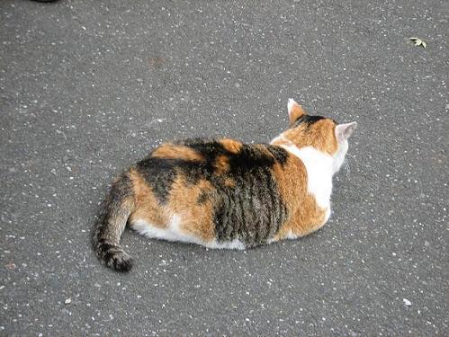 やなせん猫探訪 047