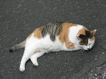 やなせん猫探訪 052