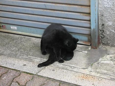 やなせん猫探訪 054