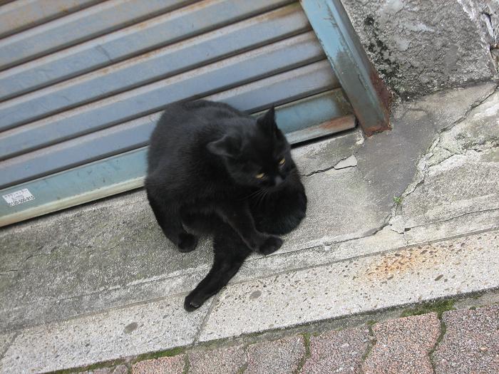 やなせん猫探訪 055