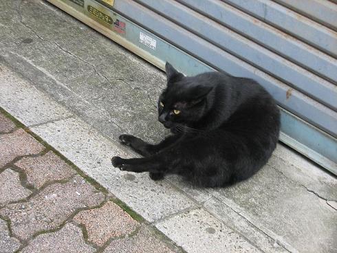 やなせん猫探訪 065