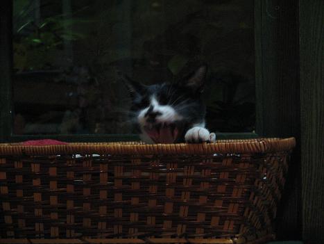 やなせん猫探訪 123
