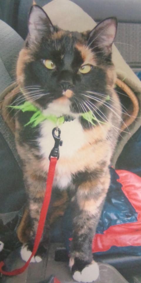 旅猫めいさんグッズ 001