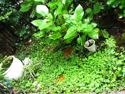 ドエルの秋の庭 001