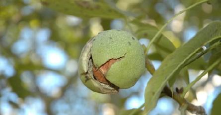 kurumi_in_tree.jpg