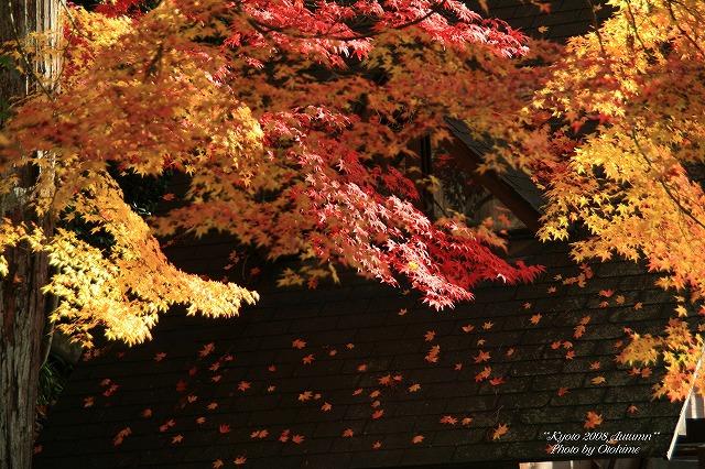 fIMG_3797永観堂