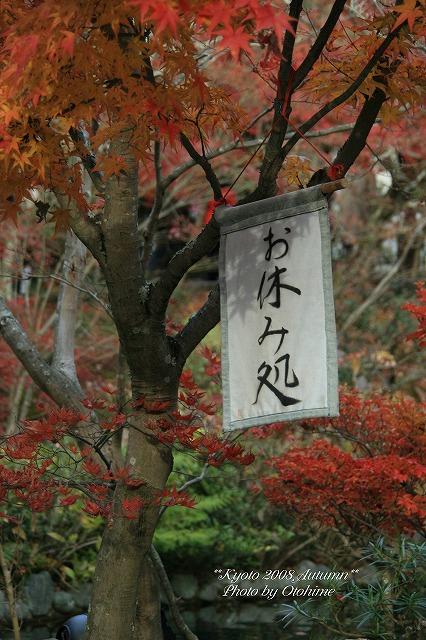 fIMG_3831永観堂