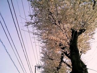 2010日米親善桜祭り上瀬谷通信基地FUNNEL CAKE+チョコ012