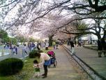 米海軍厚木航空施設)日米親善桜祭り2-4JUMBOセットメニューのホットドック005