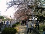 米海軍厚木航空施設)日米親善桜祭り2-4JUMBOセットメニューのホットドック006