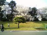 米海軍厚木航空施設)日米親善桜祭り4-4ナチョ003
