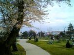米海軍厚木航空施設)日米親善桜祭り4-4ナチョ021