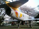 米海軍厚木航空施設)日米親善桜祭り4-4ナチョ026
