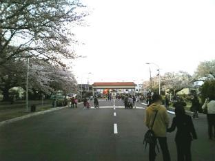 米海軍厚木航空施設)日米親善桜祭り4-4ナチョ031