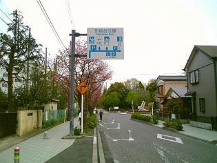 2011年、神奈川県大和市引地台公園の桜1