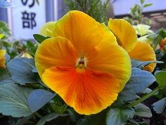 mini_R0012327.jpg