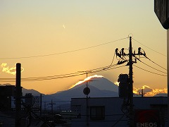 mini_R0013648.jpg