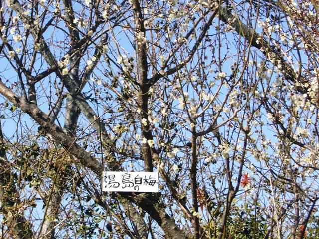 平草原公園の梅