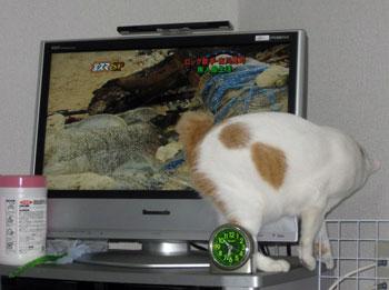 テレビの裏に行きたい1002