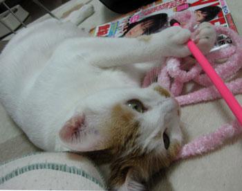 ピンク紐とはるちゃん1030-2
