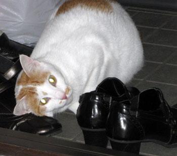 靴大好きにゃ1128