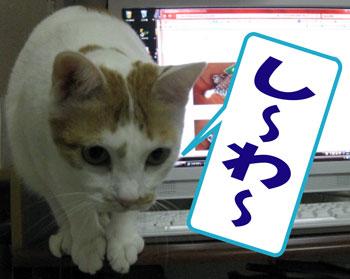 師走ニャ1201