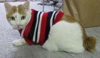 セーター着せられた1225