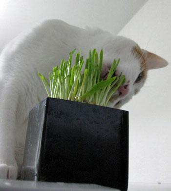 やっぱ草はおいしいにゃ0102-