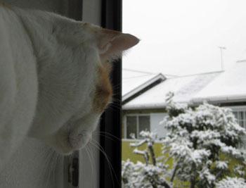 また雪にゃ0219