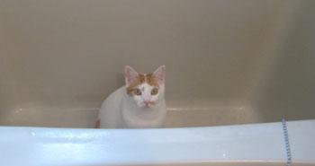 お風呂イン0222