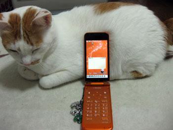新しい携帯にゃ0307
