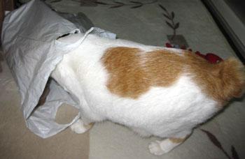 猫として当然ニャ0322