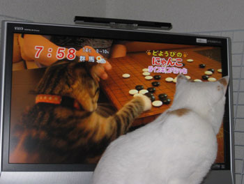 囲碁楽しそうニャ0328