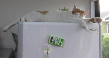 冷蔵庫で寝る0629